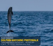 DOLPHIN WATCHING PHOTOWALK